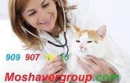 حداقل رتبه لازم برای قبولی دامپزشکی 98 ( 60 کارنامه قبولی کنکور 97 )
