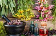 تراز و درصدهای مورد نیاز قبولی مهندسی گیاه پزشکی در شهرهای مختلف کنکور 97