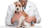 تراز و درصدهای مورد نیاز قبولی دکتری عمومی دامپزشکی در شهرهای مختلف کنکور 97