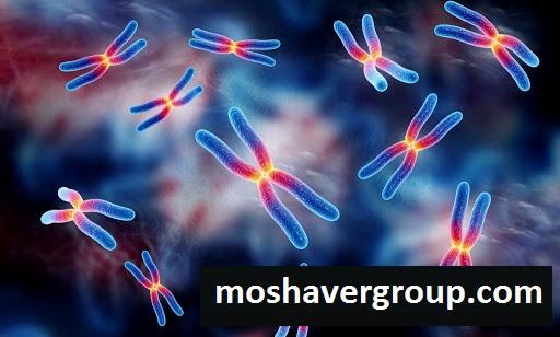 رتبه قبولی دکتری ژنتیک مولکولی